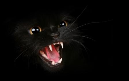 К чему снится черная кошка, которая нападает? фото