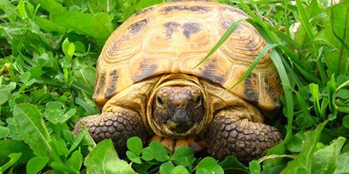К чему снится мертвая черепаха? фото