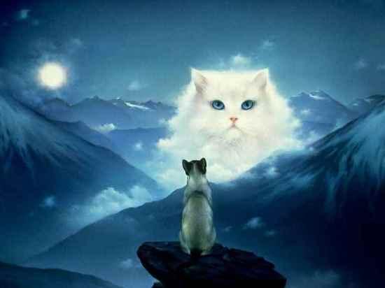 К чему снятся кошки? фото