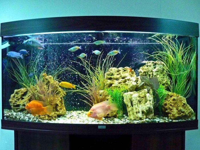 Как правильно выбрать и обустроить аквариум? фото