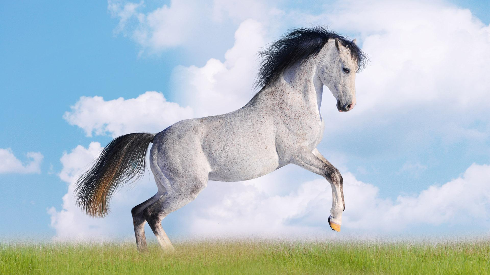К чему снится белый конь? фото