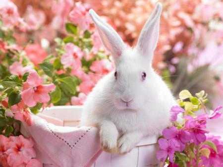 К чему снится белый кролик? фото