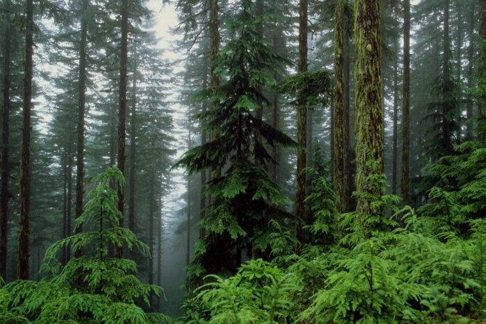 К чему снится лес? фото