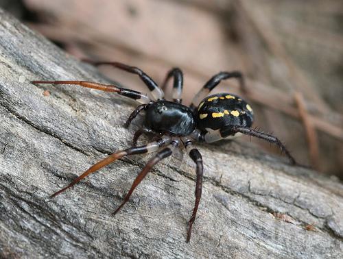 К чему снятся пауки большие? фото