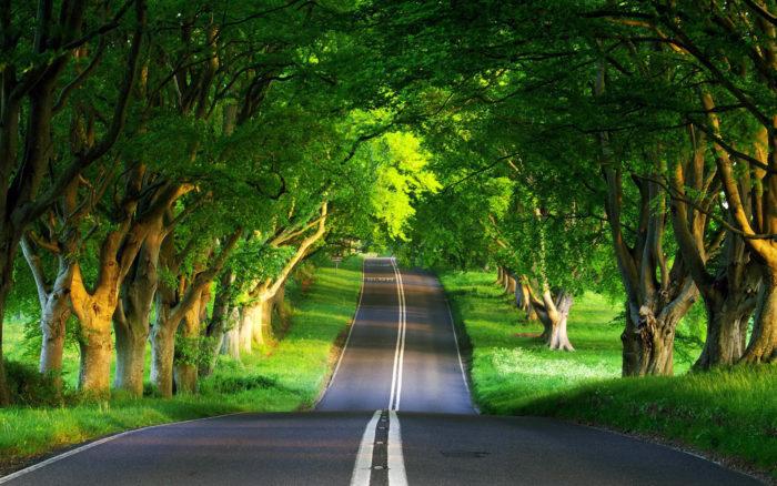 К чему снится красивая дорога? фото