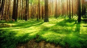 К чему снится зеленый лес? фото