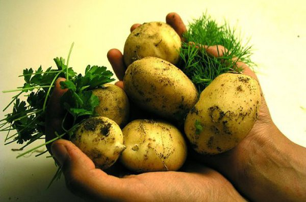 К чему снится покупать картошку? фото