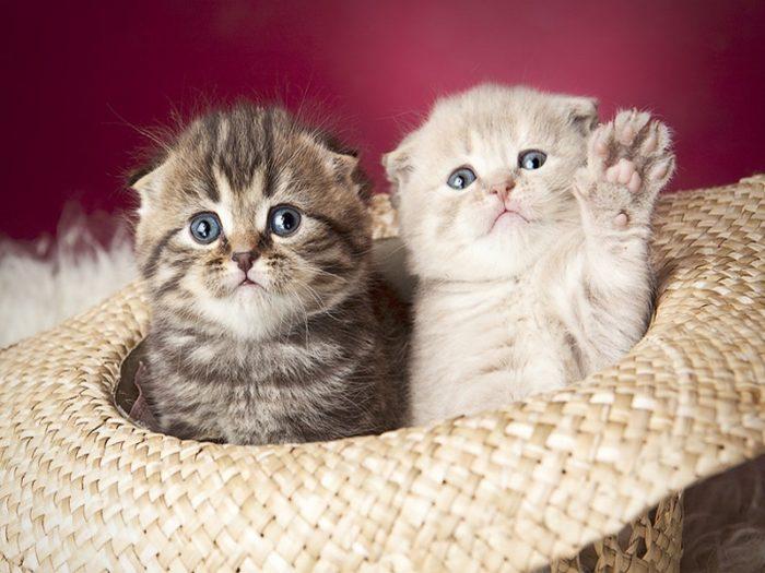 К чему снятся два котенка? - фото