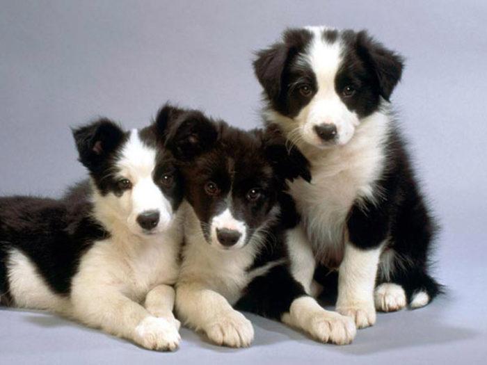 К чему снятся черно белые собаки? фото