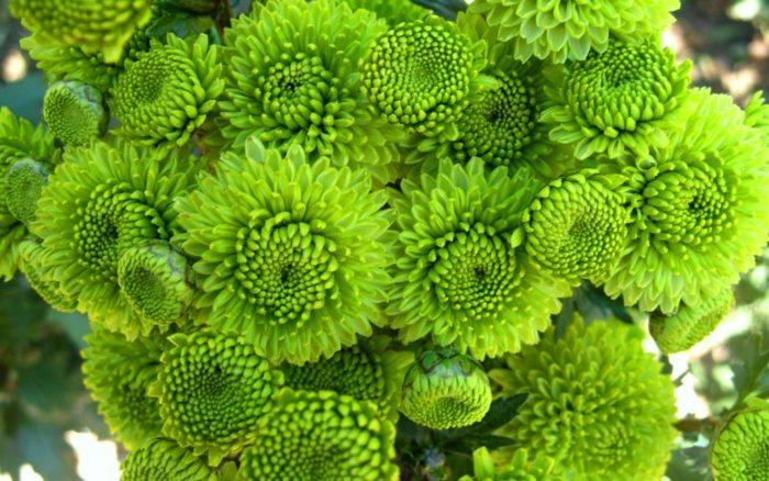 К чему снятся зеленые цветы? - фото