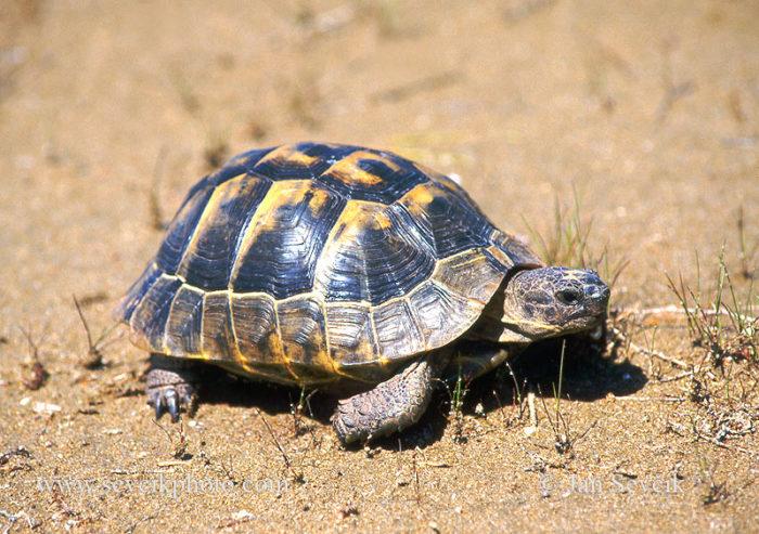 К чему снится черепаха? фото
