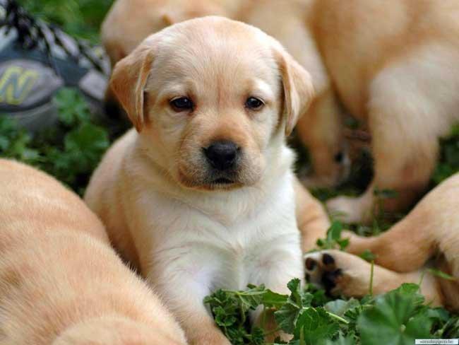 К чему сниться родить щенка? фото