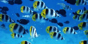 ryba-v-vode-1