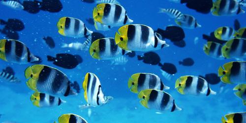 К чему снится живая рыба девушке? фото