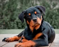 Какие породы собак популярны сегодня? - фото