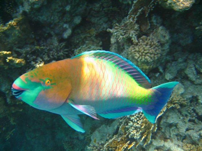 К чему снится видеть рыбу? фото