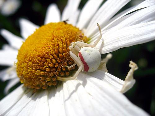 К чему снится белый паук? фото