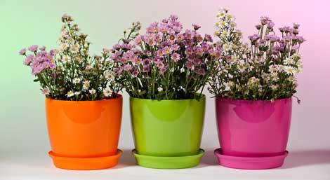 Какие горшки выбрать для комнатных растений? фото