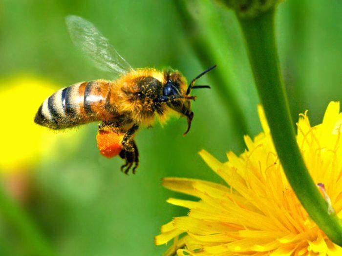 К чему снится укус пчелы? фото