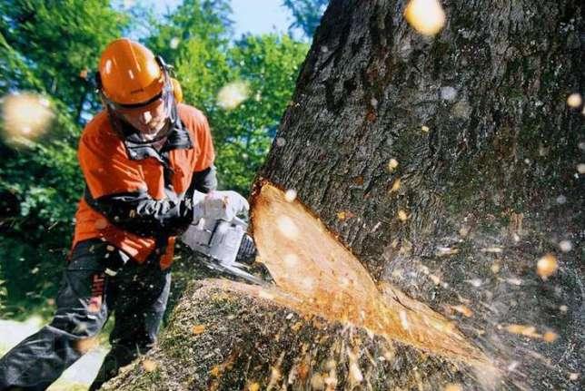 Как правильно спилить дерево бензопилой? фото