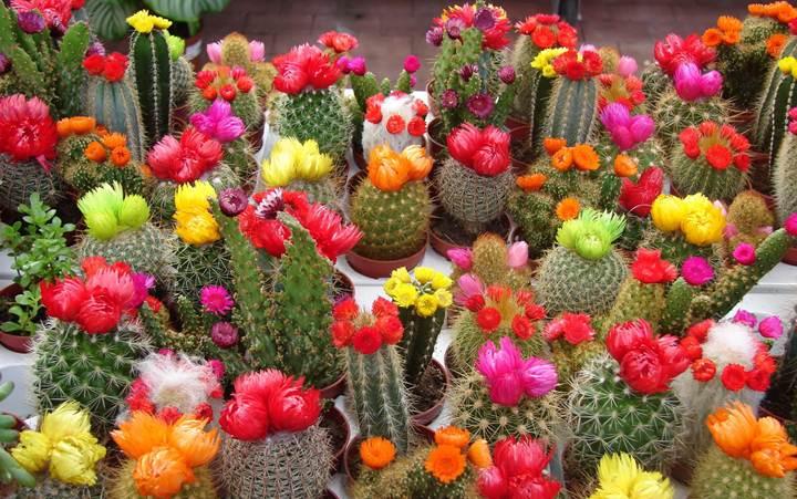 Как ухаживать за кактусами? фото