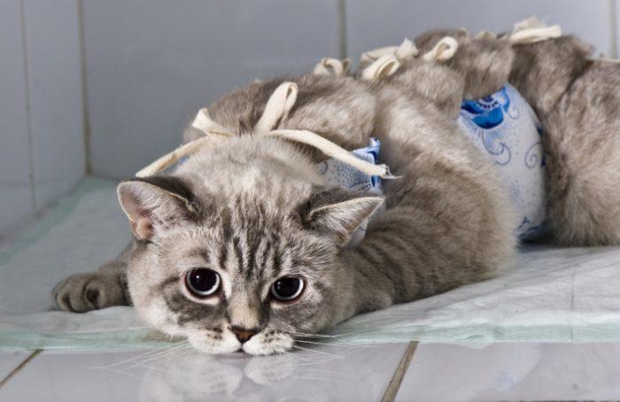 Почему у контрацептивов для животных возникают противники? фото