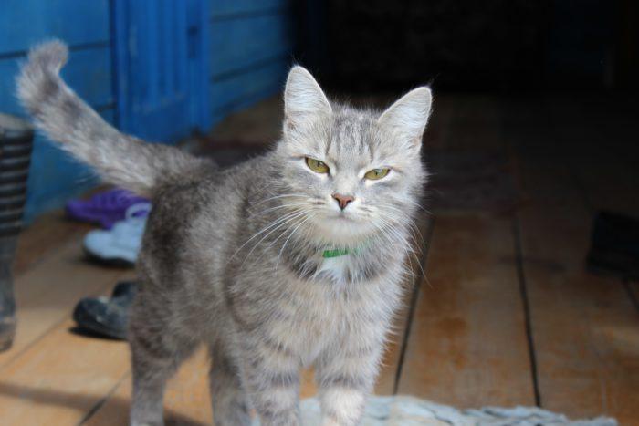 Администратор санатория хотел выгнать женщину, приютившую в номере тяжелобольную кошку фото