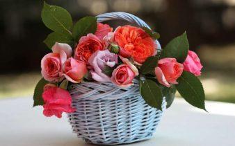 bukety-cvety-rasteniya-rozy-35271