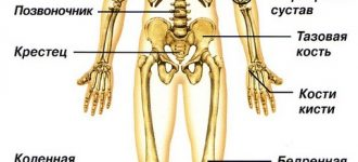 Тяжелеют ли с возрастом кости? фото