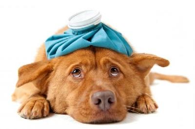 Особенности усыпления домашних животных - фото