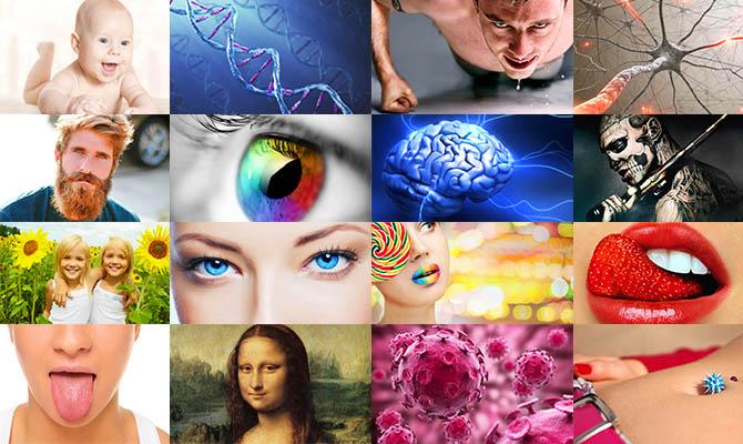 Какие интересные факты известны о человеке? фото