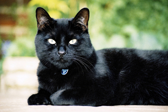 Почему бояться черных кошек? фото