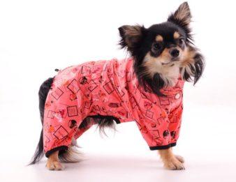 Каким собакам нужна одежда? фото