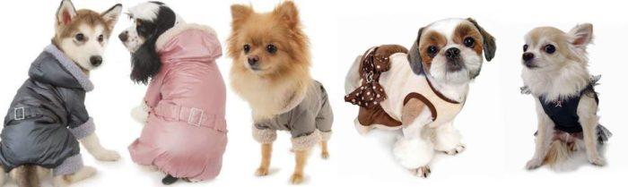 Как правильно выбрать одежду для собак? фото
