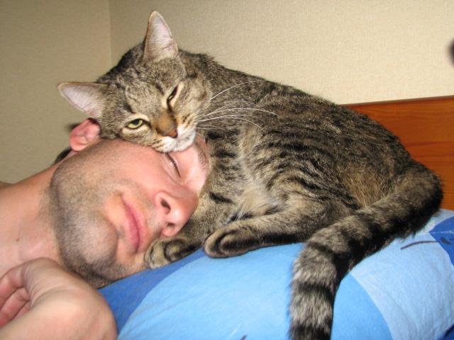 Как приучить кота спать со мной? фото