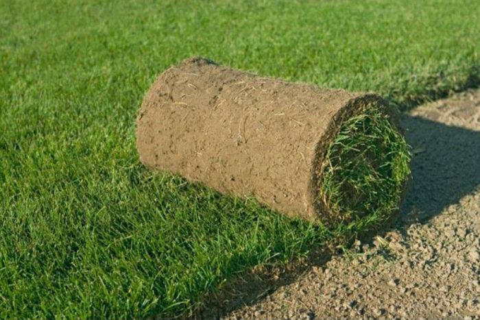 Рулонный газон: как выбрать? фото