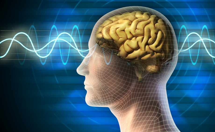 Что известно о человеческом мозге? фото