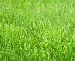 Почему трава зеленая?