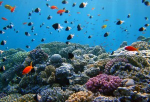 Underwater life in beautiful coral reef, Red Sea