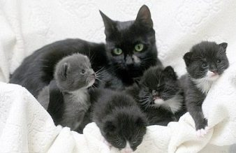 jolie-and-her-kittens
