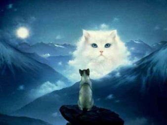 1422365024_cat-dream